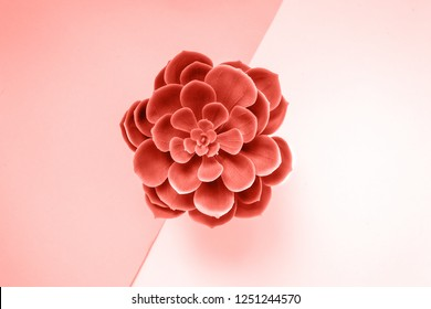 Beautiful green succulent isolated on yellow background. Flat lay, top view. Color of the year 2019 Living coral.