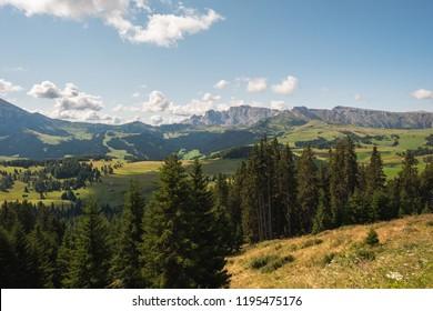 Beautiful green summer landscape in Alpe di Siusi in Italy