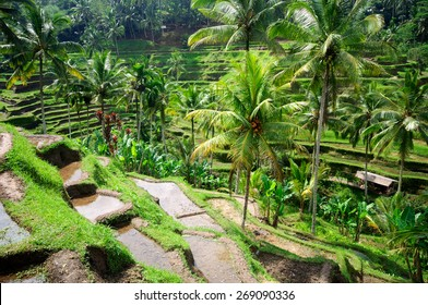 Beautiful green terrace paddy fields on Bali, Indonesia