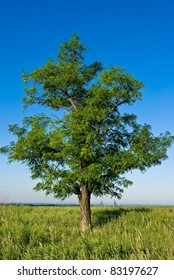 beautiful green tree on a blue sky background