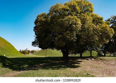 Beautiful green tree in the park