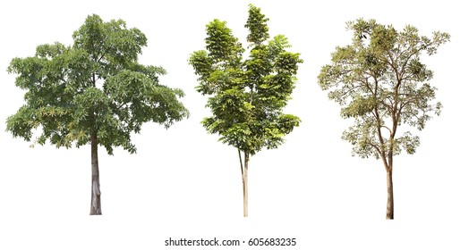 Beautiful  green trees collection on white background.