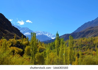 Beautiful Green Trees On Top of the Mountains, Beautiful Green Kargil Valley, Nature Amazing View, Blue Sky, Bright Sunny Day, Leh Ladakh, J&K India, Himalayas, October 2015