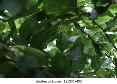 Beautiful green treetop rich with leaves