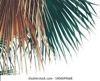 Beautiful of green tropical leaves isolate white background
