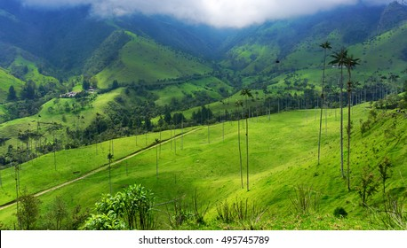Beautiful green valley and wax palm trees in Cocora Valley near Salento, Colombia