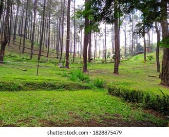 beautiful green view oudoors gress