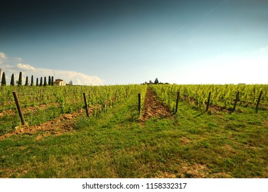 Beautiful green vineyard and blue sky near Florence during summer season. Chianti region in Tuscany. Italy.