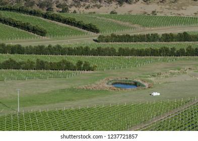 Beautiful green vineyard during summer season