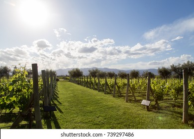 Beautiful green vineyard in Mendoza Region in Argentina