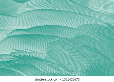 Beautiful green - white vintage color trends feather texture background