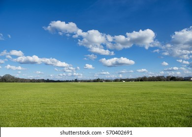 Beautiful Green Winter Grass Under Partly Cloudy Sky in Louisiana