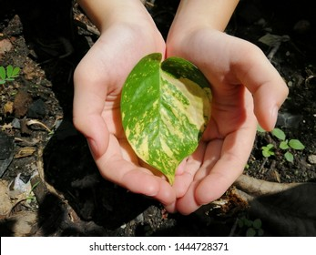 beautiful green and yellow leaves in girl's hand with ground background, concept save the world