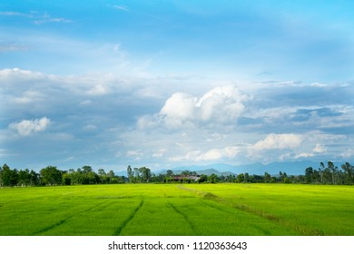 Beautiful green young paddy  rice field and wide cloudy sky in rainy season.  Natural landscape scene. Farm land scenic Agriculture land plot for sales. North of Thailand.