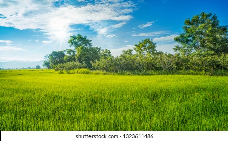 Beautiful green young paddy rice field and wide cloudy sky in rainy season. Wet in-season crop. Natural landscape countryside scene. Farmland scenic. Agriculture land plot for sales. North of Thailand