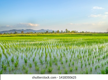 Beautiful green young paddy rice field with water and wide summer sky with mountain hill. Dry season irrigated, double crop. Natural landscape countryside. Agriculture land plot for sales. Thailand