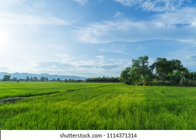 Beautiful green young rice field and wide cloudy sky in rainy season.  Natural scene. Farm land scenic North of Thailand. Agriculture land plot for sales.