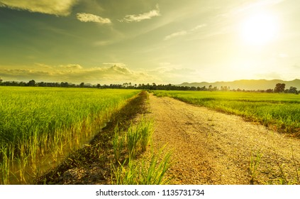 Beautiful green young rice field, local soil road, morning golden sun light and wide sky in rainy season.  Natural scene. Farm land scenic North of Thailand. Agriculture land plot for sales.