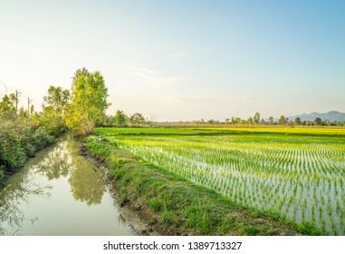 Beautiful green young rice field, small rain water canal, ditch, tree and wide cloudy sky in summer season. Dry-season irrigated crop.  Natural upcountry scene. Agriculture. Land plot for sales.