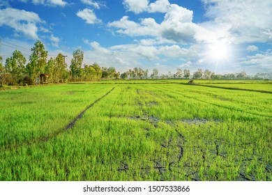 Beautiful green young rice field, small rain water canal, ditch, tree and wide cloudy sky in rainy season. Wet in-season crop.  Natural upcountry scene. Agriculture land plot for sales. Thailand