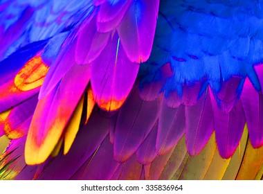 beautiful Green-winged Macaw (Ara chloropterus) back feather