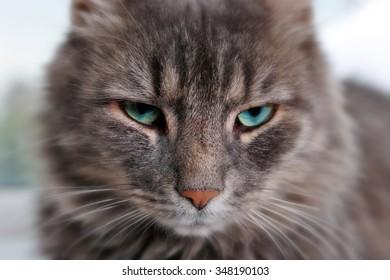 Beautiful grey cat lying on window board, close up
