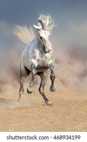 Beautiful grey horse with long mane in dust