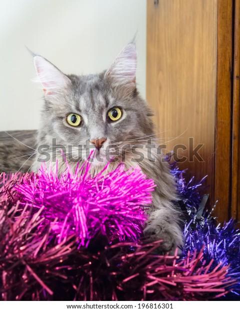 Beautiful Grey Tabby Cat Large Green Stock Photo Edit Now 196816301