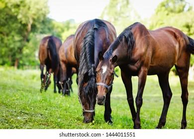 beautiful groomed horses on a farm