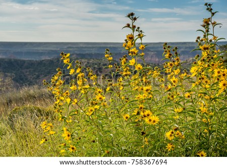 Beautiful grove tall yellow flowers butterflies stock photo edit beautiful grove of tall yellow flowers and butterflies blowing in the wind of the palo duro mightylinksfo