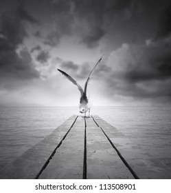 Beautiful gull with a wingspan resting on a pier at the beach with dramatic sky in black and white
