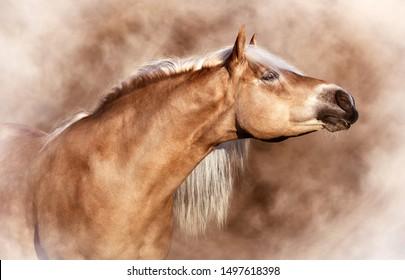 Beautiful Haflinger horse portrait in mist