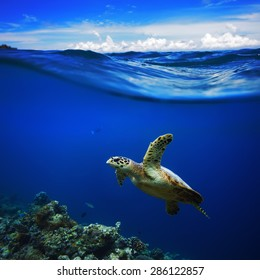 Beautiful Half Water Waterscape With Clouds in Sky Postcard. Maldivian Sea Turtle Floating Up And Over Coral reef. Loggerhead in wild nature habitat