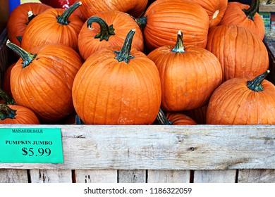 Beautiful Halloween orange pumpkins on a sale in a street store