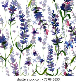 Beautiful hand drawn  lavender flower seamless pattern. Isolated objects on white background. Perfect for wallpapers, web page backgrounds, surface textures, textile.