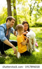Schöne glückliche Familie macht Spaß mit Bichon Hund draußen im Park
