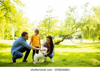 Beautiful happy family is having fun with bichon dog outdoors in the park - Shutterstock ID 1928246861