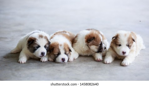 Beautiful happy four puppies lying on the floor