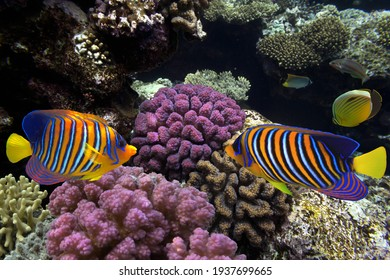 Beautiful hard colal and tropical fish underwater photography