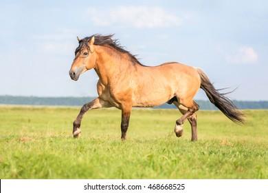 Beautiful harness horse .