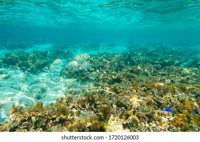 Beautiful Hateruma blue and fish