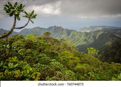 Beautiful Hawaiian rainforest in the mountains on Ohau, Hawaii