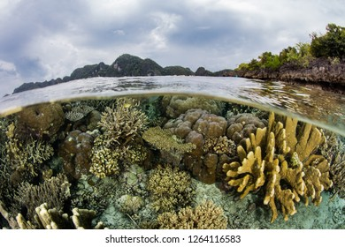 "A beautiful and healthy coral reef grows among the remote islands of Raja Ampat, Indonesia. This biodiverse region is known as the ""heart of the Coral Triangle"" due to its amazing marine life."