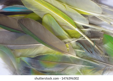 Beautiful heap group parrot lovebird feather pattern texture background