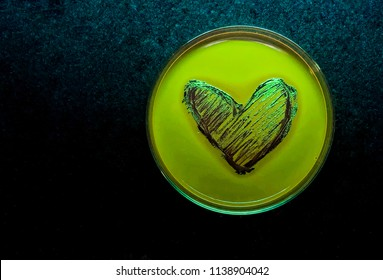 The beautiful heart shape streak of metalic black colony of E. coli on the EMB agar plate isolated on black fabric background
