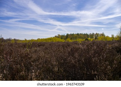 Beautiful heathland in the Drover Heide nature reserve