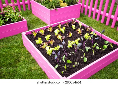 Beautiful herb garden. Pink raised beds with herbs and vegetables. Trendy garden design