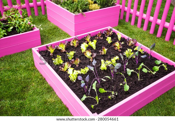 Beautiful Herb Garden Pink Raised Beds Stock Photo (Edit Now ... on raised patio designs, cottage designs, raised fireplace designs, raised garden ideas, raised vegetable garden box, raised garden boxes, raised garden planting designs, planter box designs, raised flower bed designs, raised garden beds, raised garden plans, small backyard designs, raised garden planting layout, raised garden planting guide, raised garden trellis designs, raised chicken coop designs, raised garden table, raised garden planters, wooden raised bed designs, back patio designs,