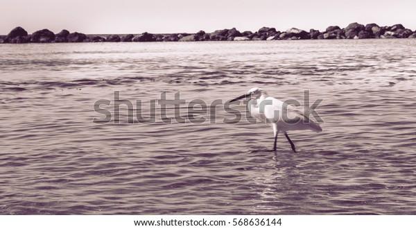 Beautiful Heron on the beach Black and White