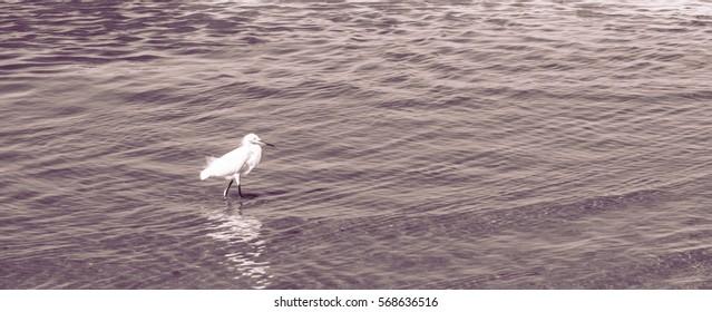 Beautiful Heron on the beach Fishing in the morning
